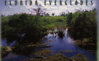 von Angi aus Florida Everglades