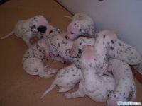 fototagebuch dalmatiner woche 03 03