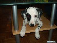 fototagebuch dalmatiner woche 08 03