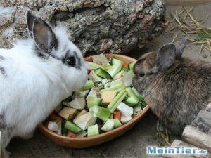 Getreidefreie Kaninchennahrung