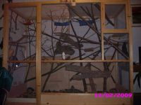 haltungsbericht sibirisches streifenhoernchen 4