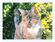 Katze von juleBorst